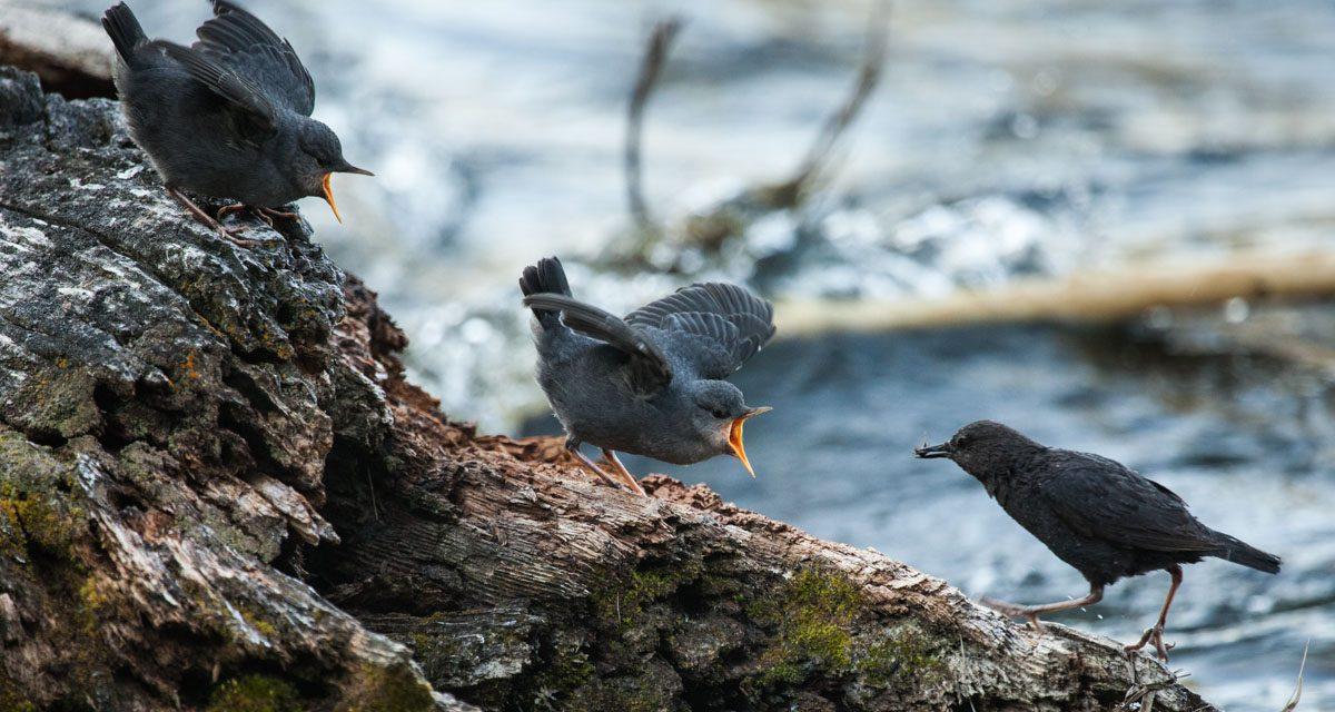 Birds On a Log…